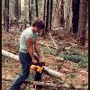CUTTING WOOD IN BLUE CANYON